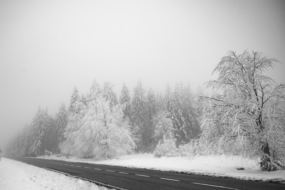 snow covered trees and road