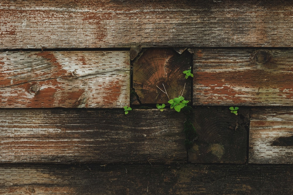 green plant on brown wooden surface