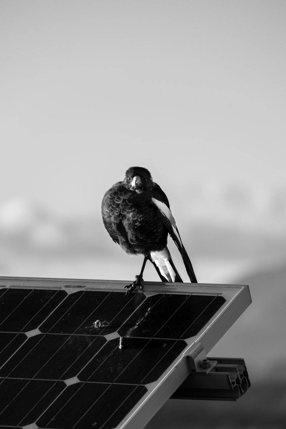 black and white bird on white wooden table