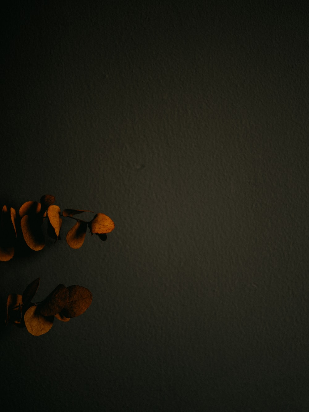 brown and black leaves on gray surface