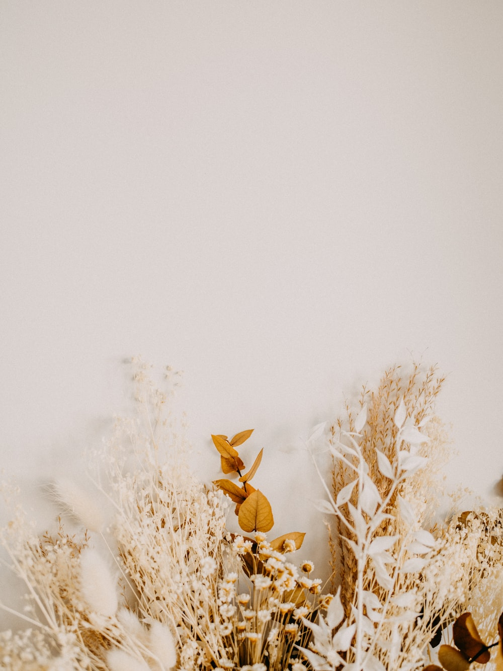 brown dried plant on snow covered ground