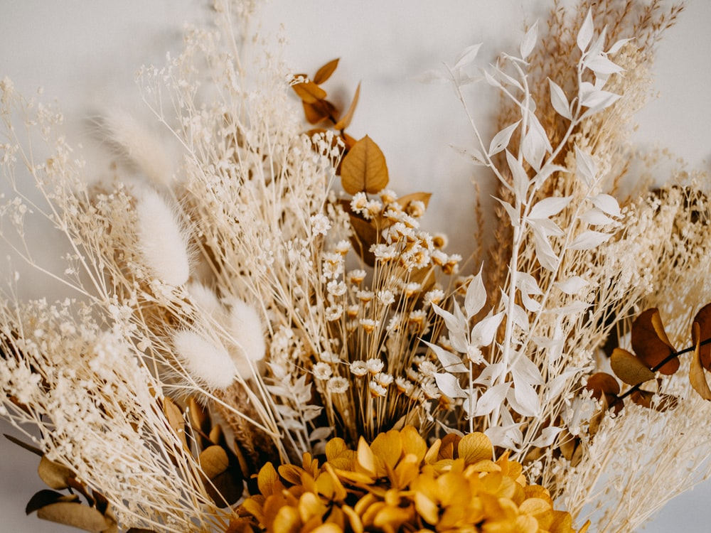 yellow flower on brown dried grass