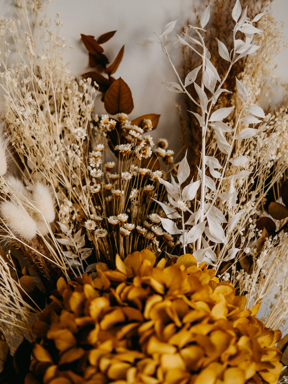 yellow flowers on brown dried grass