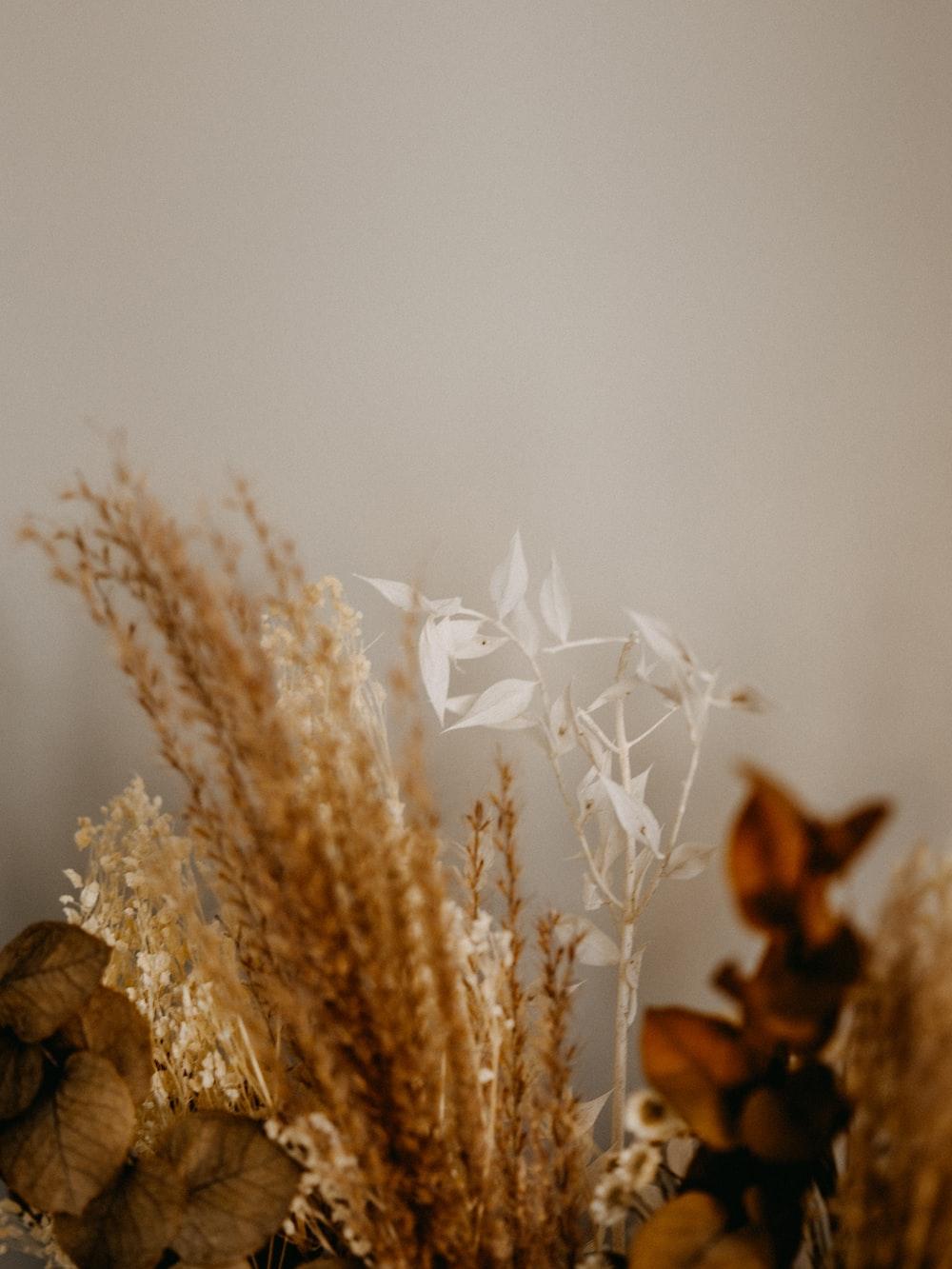 white flower on brown rock