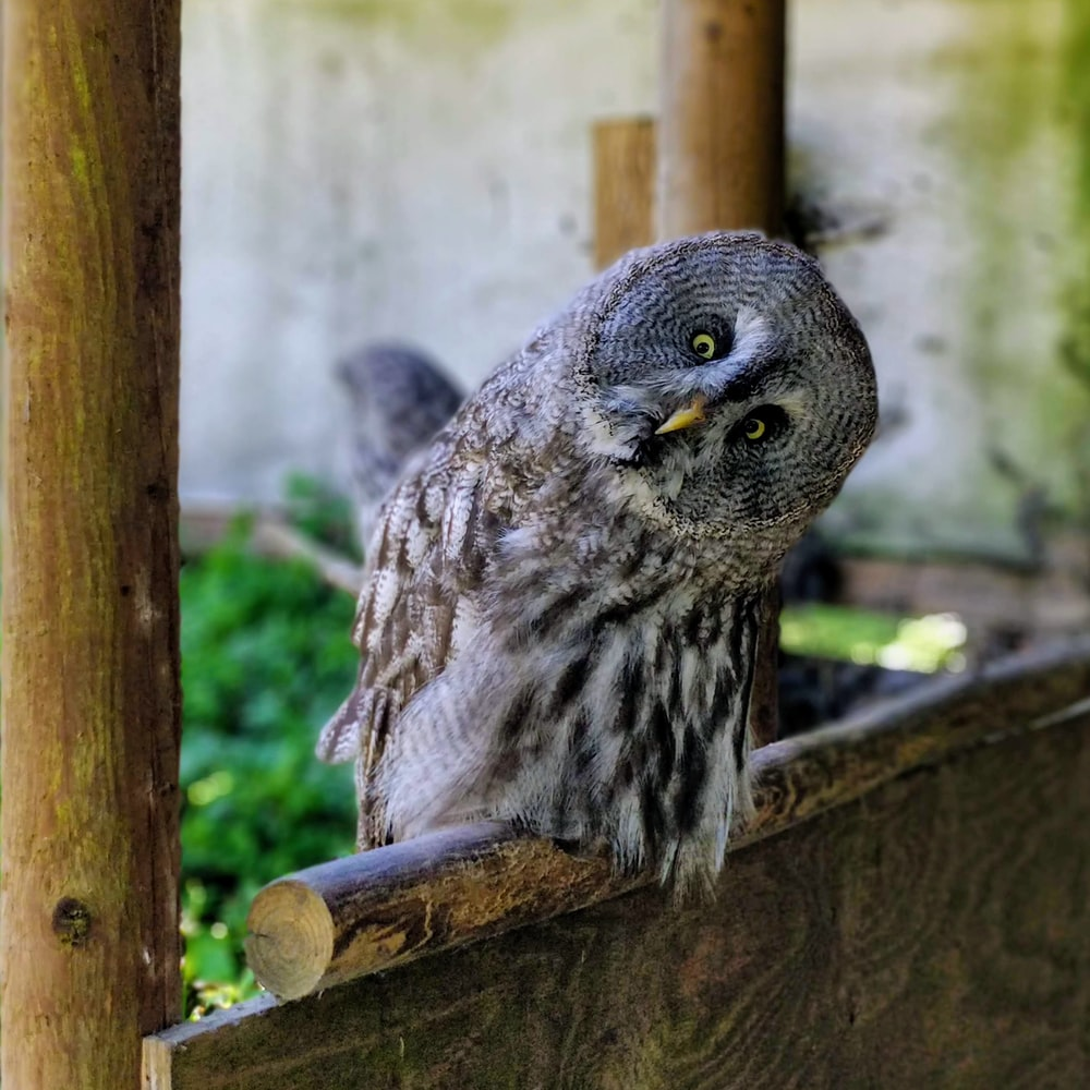 gray owl on brown wooden fence during daytime