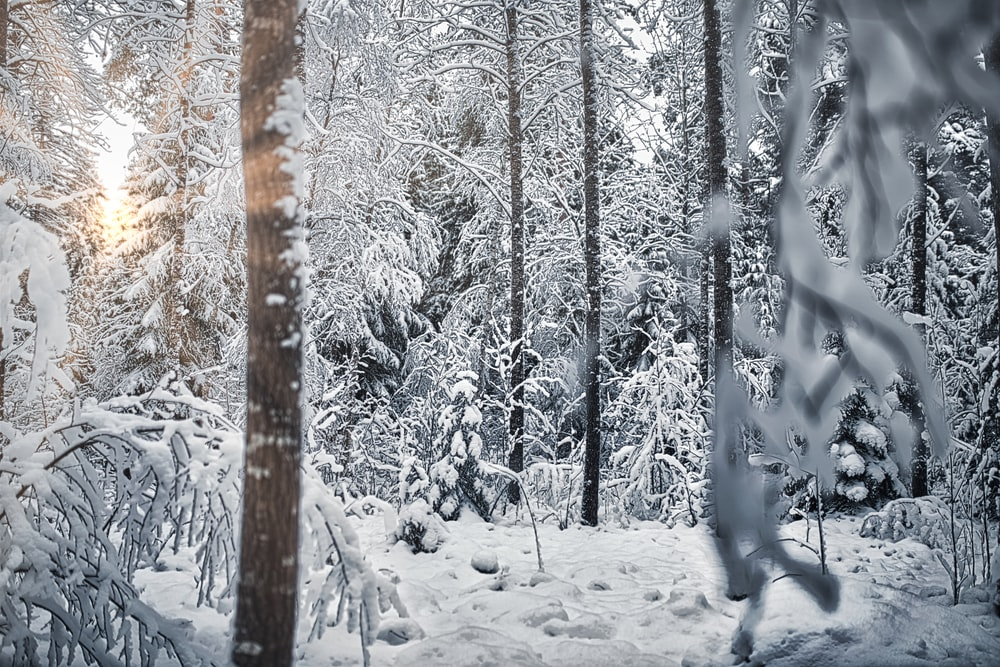 snow covered trees during daytime