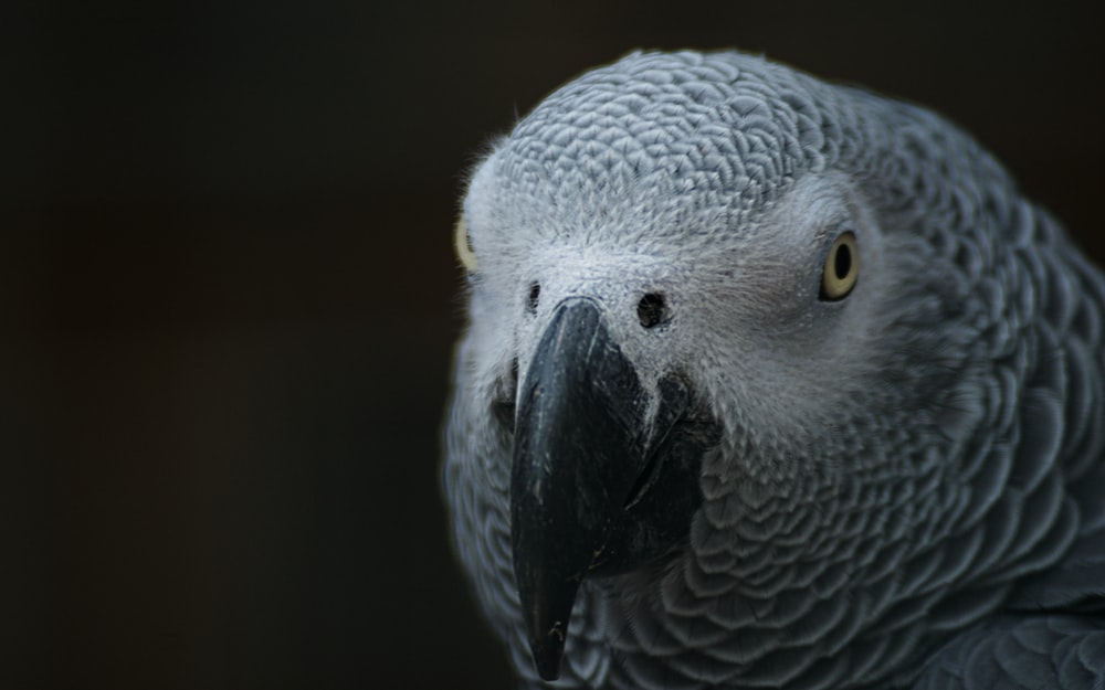 grey and white bird in close up photography