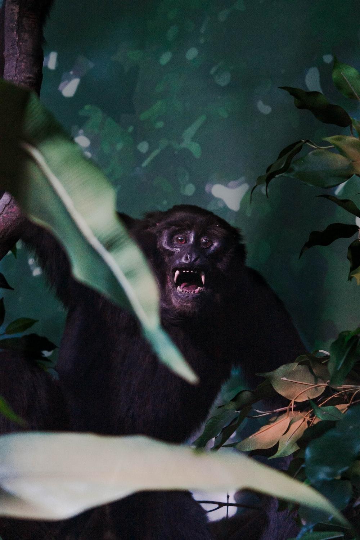 black gorilla on green leaf plant