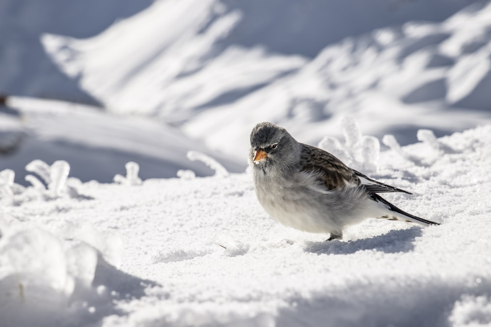 white and gray bird on snow covered ground during daytime