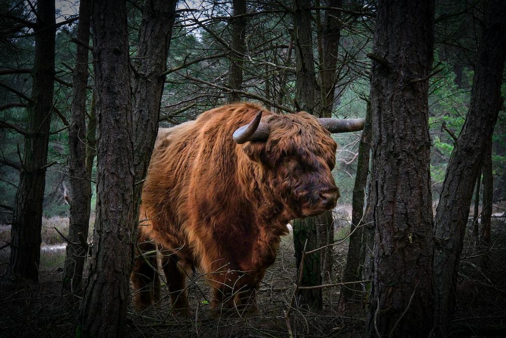 brown yak on brown tree