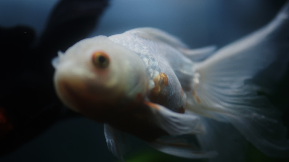 white and orange fish in close up photography