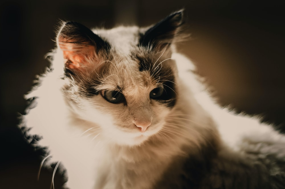 white and black cat on black textile