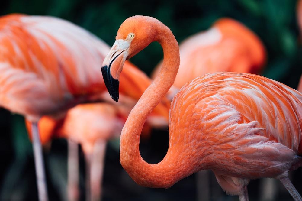 pink flamingos in tilt shift lens