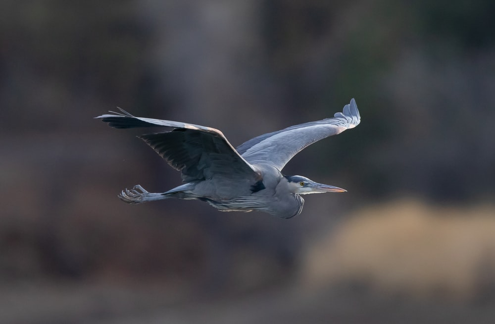 white and gray bird flying