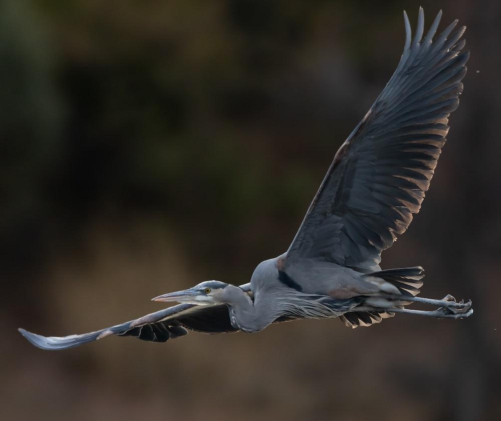 white stork flying during daytime