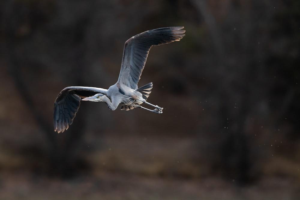 white bird flying during daytime