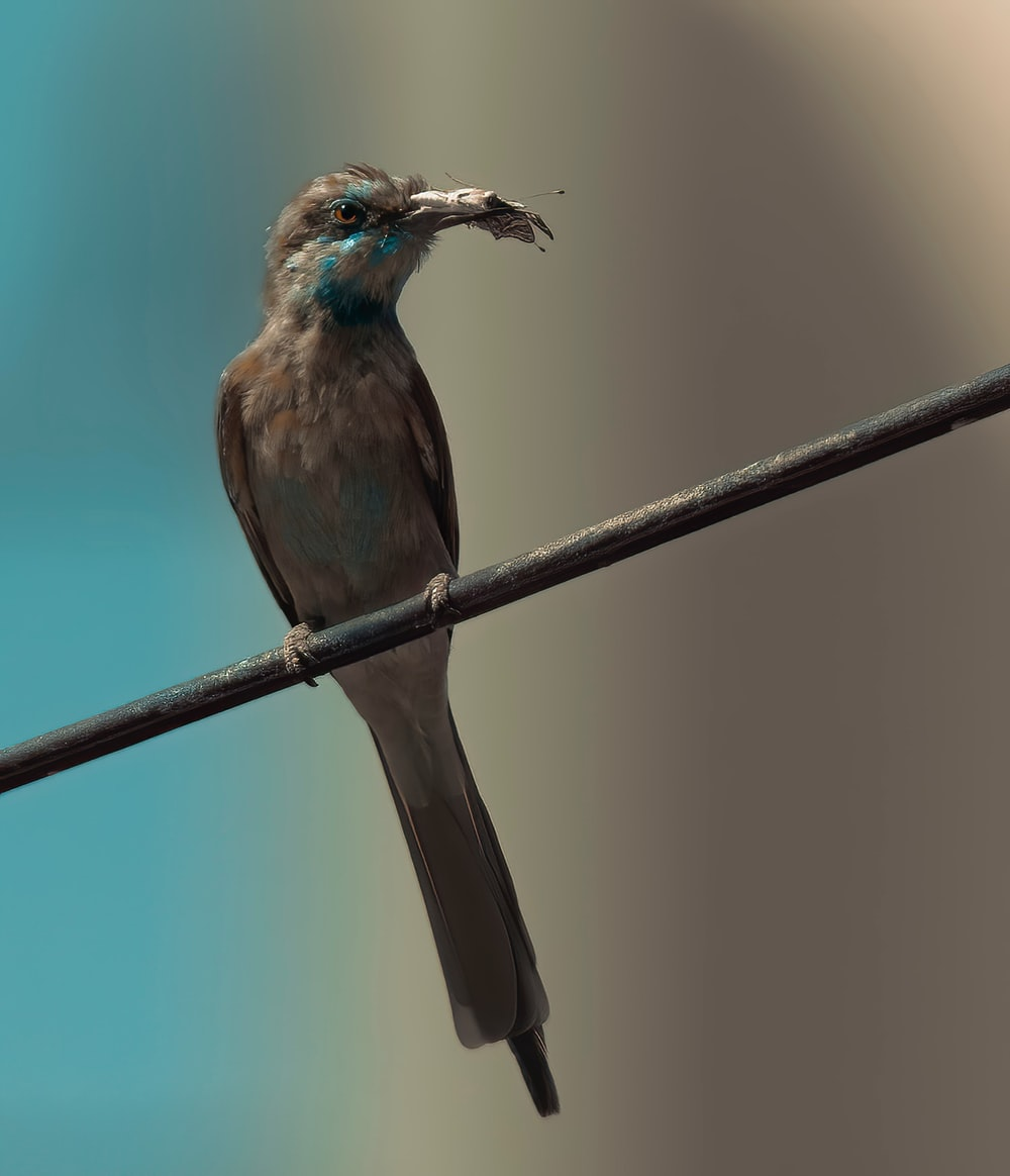 brown and blue bird on brown metal bar
