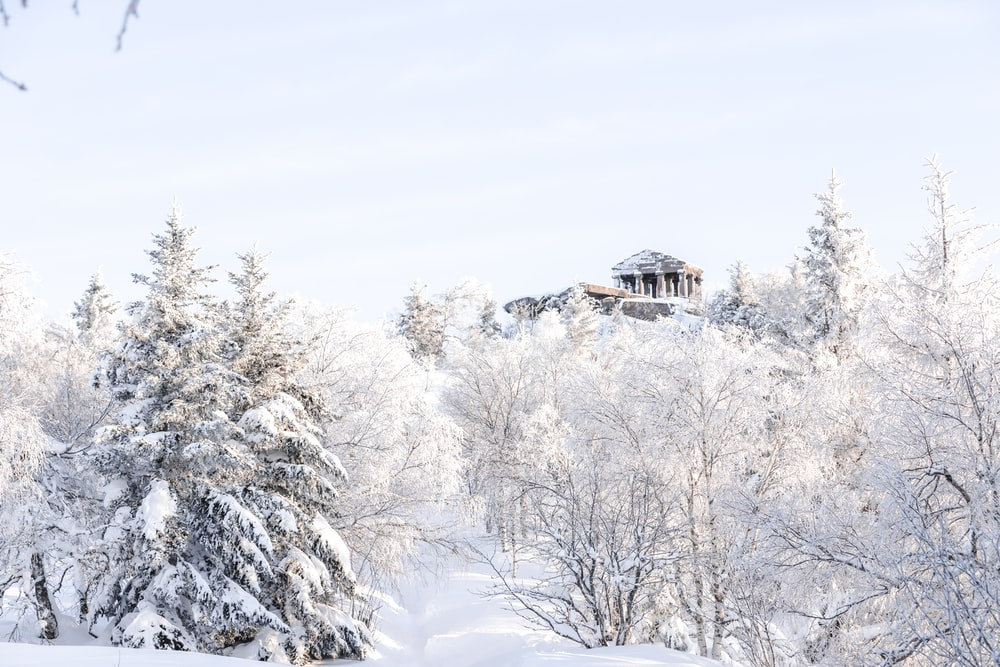brown wooden house surrounded by snow covered trees during daytime