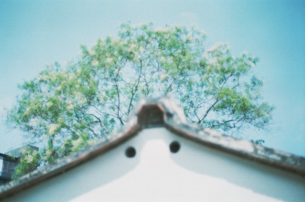 white and green tree under blue sky during daytime