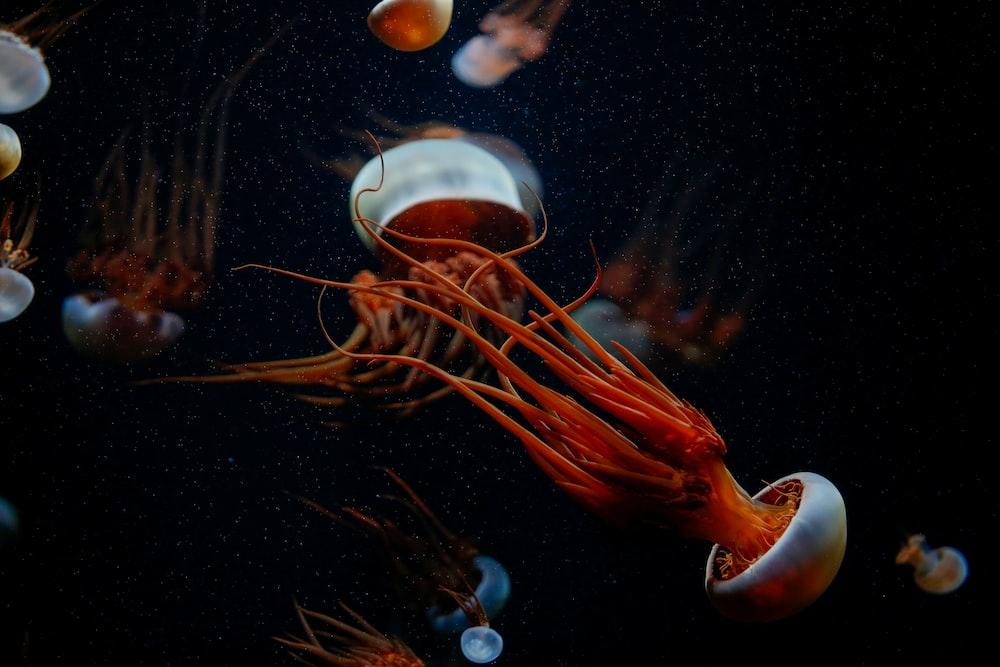 orange and white jellyfish in water