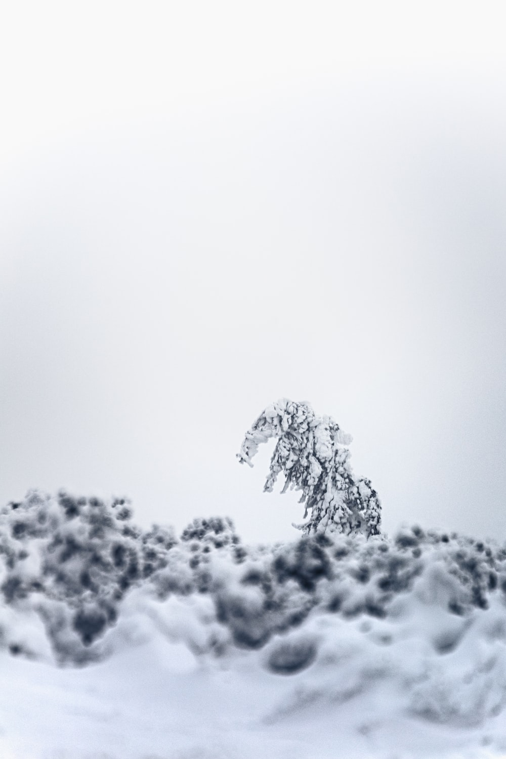 white snow covered tree during daytime