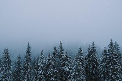 winter misty forest