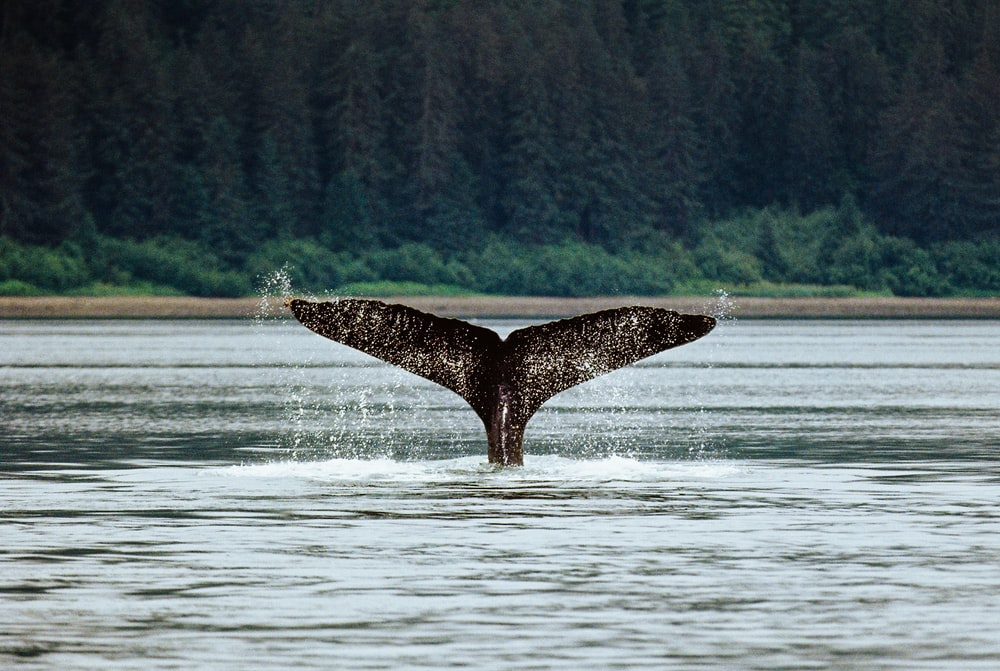 black whale on body of water during daytime