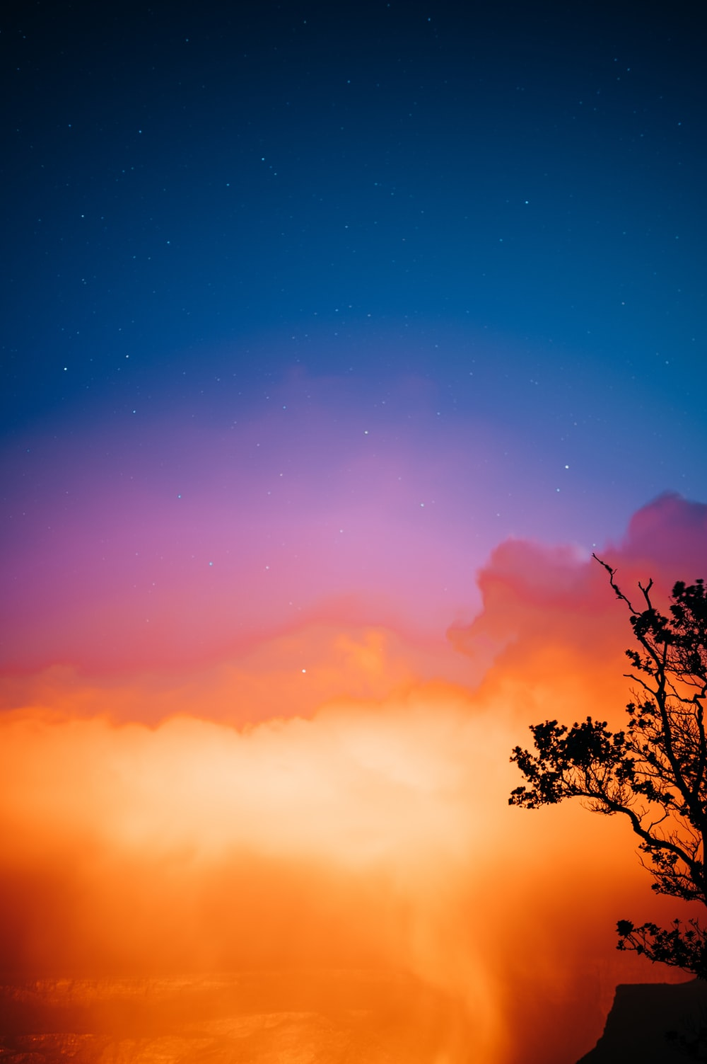 silhouette of tree under blue sky during sunset