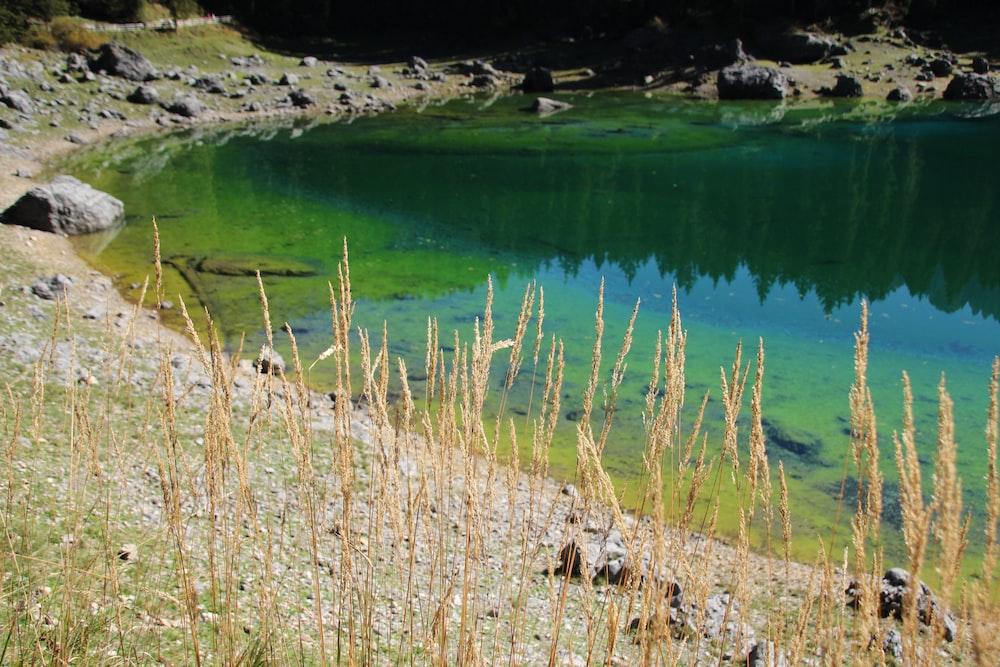 brown grass near lake during daytime