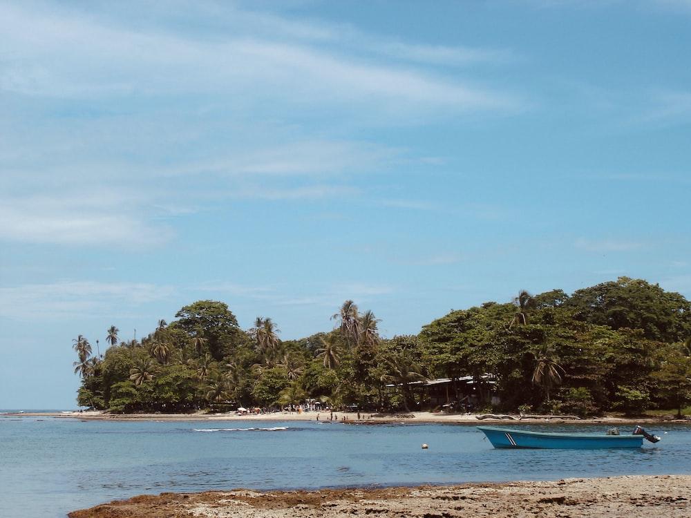 green trees on seashore during daytime