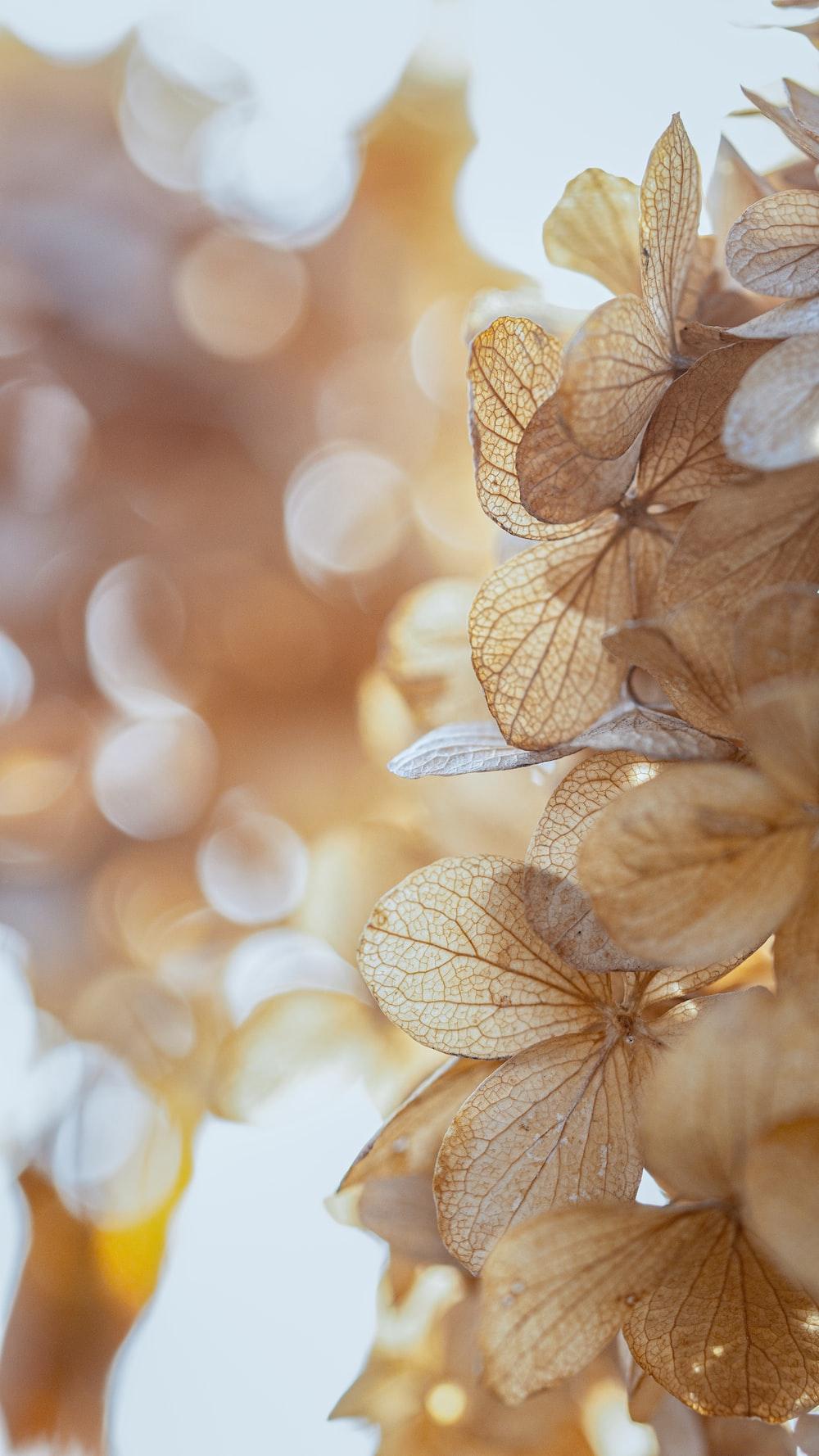 brown and white flower in tilt shift lens