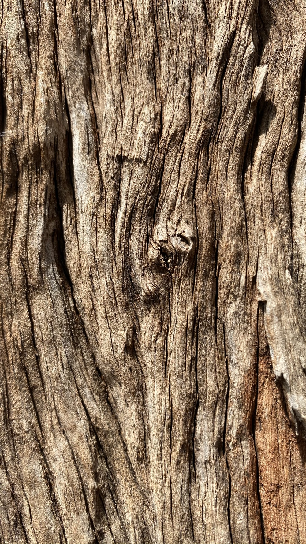 brown wood trunk in close up photography