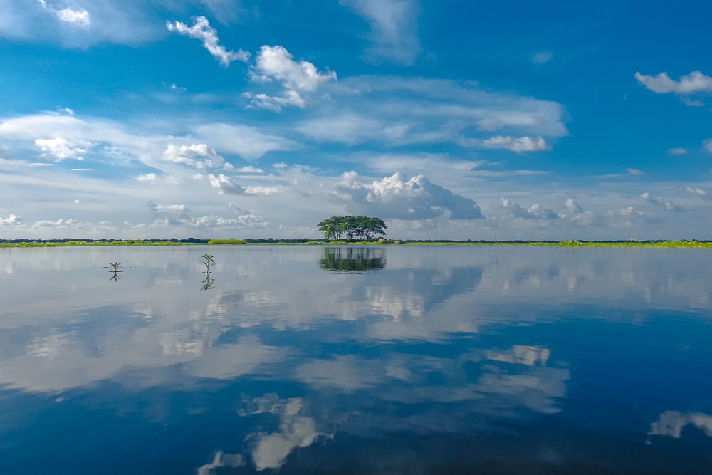 green trees beside body of water under blue sky and white clouds during daytime