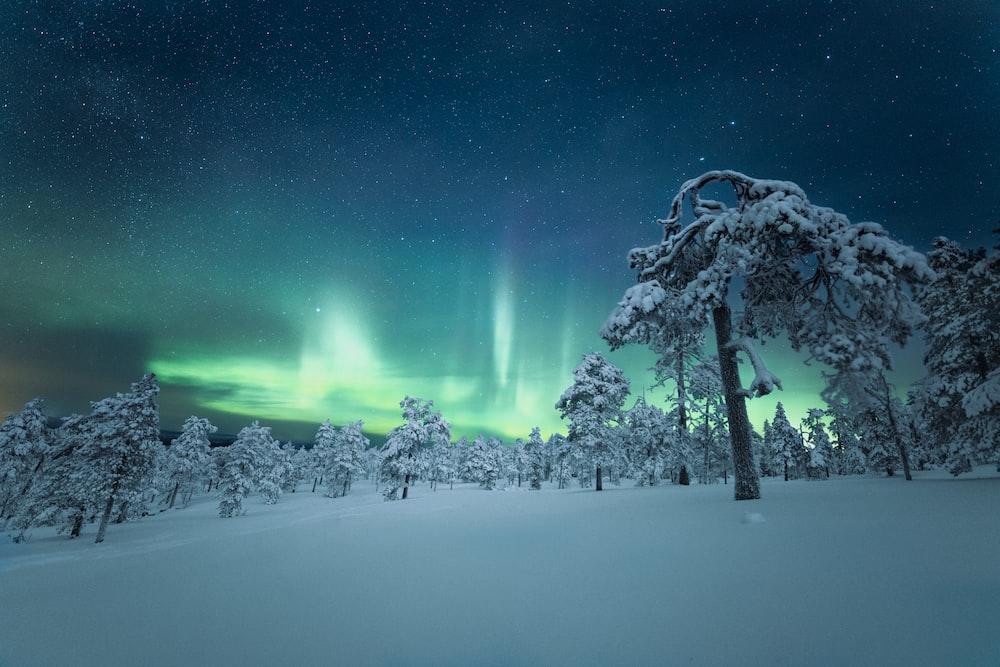 snow covered ground under starry night