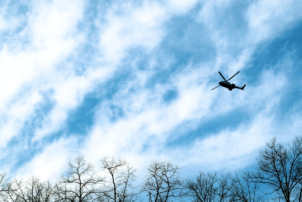 black bird flying over bare trees during daytime