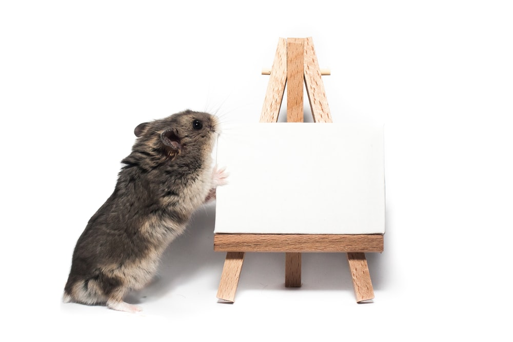 gray rodent on white table