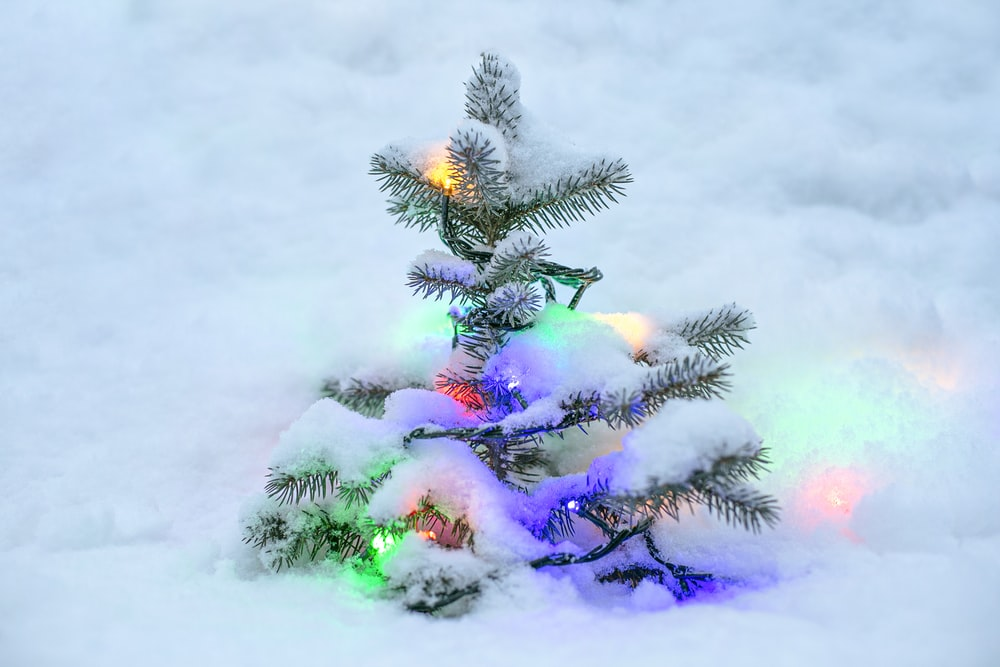 green and pink pine tree covered with snow