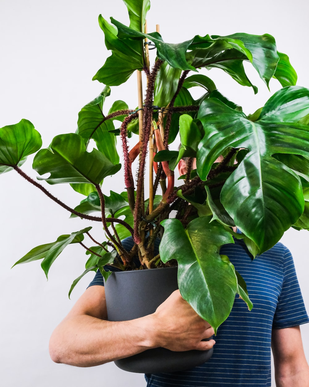 person holding green plant in blue pot