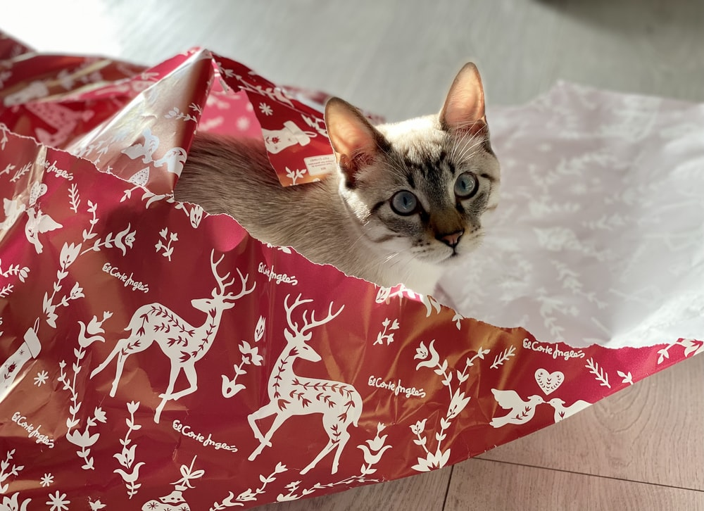 white and brown cat on red and white floral textile