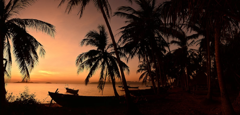 silhouette of palm trees near body of water during sunset