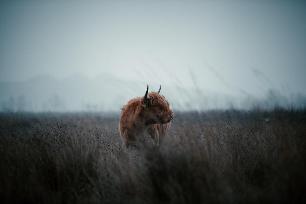 brown animal on brown grass field during daytime