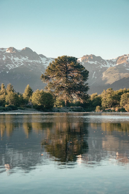 green trees near lake and mountain range