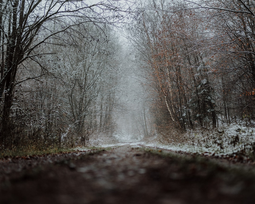 Forest Path With Snow - unsplash