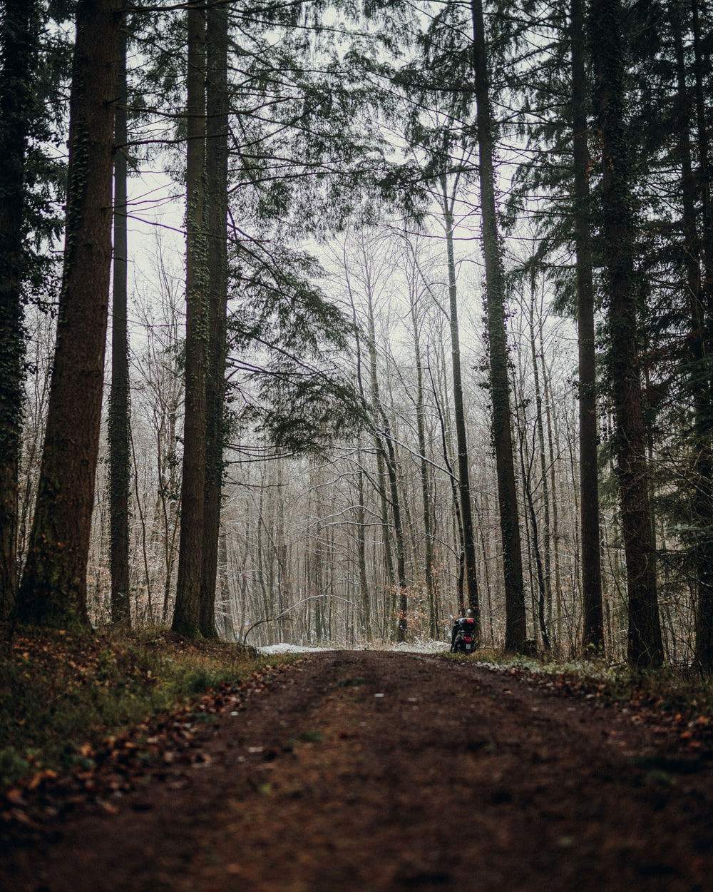person in black jacket walking on pathway between bare trees during daytime