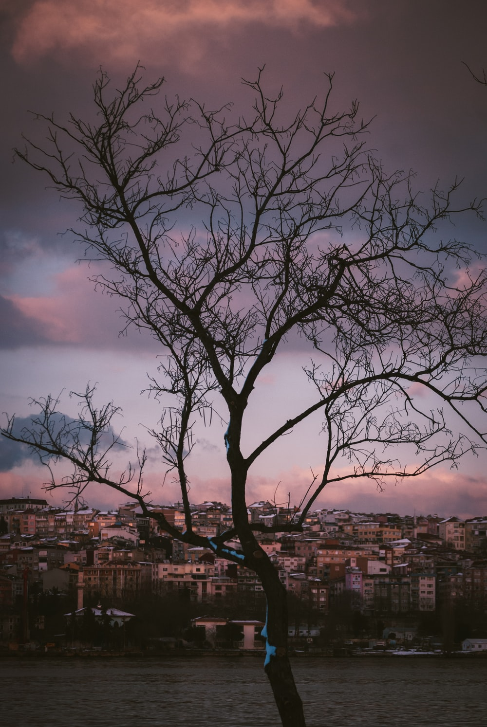bare tree near city buildings under cloudy sky during daytime