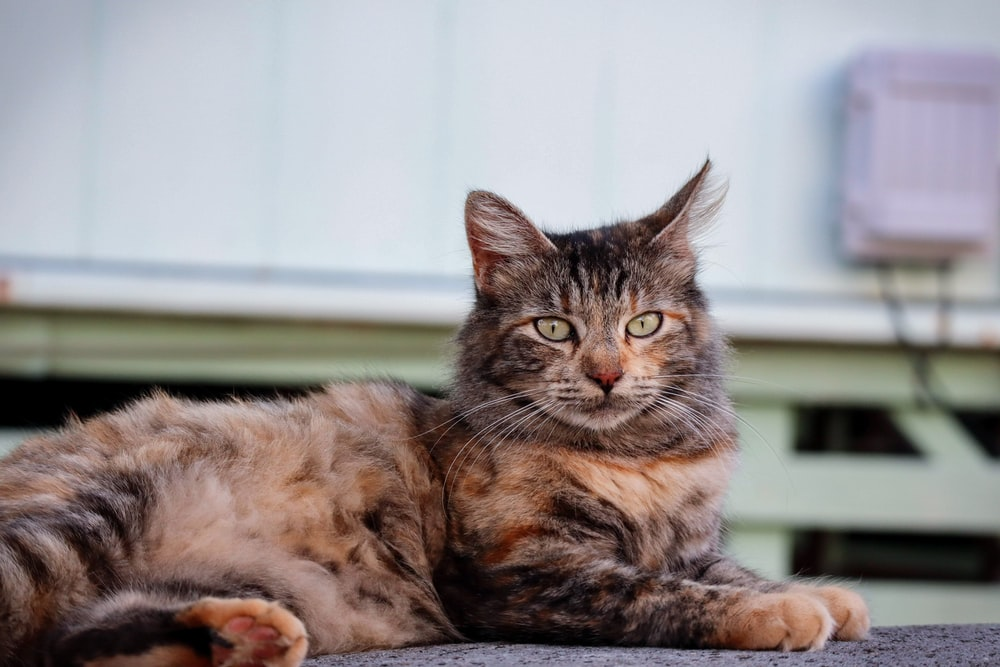 Cat Behavior Most Common Meanings