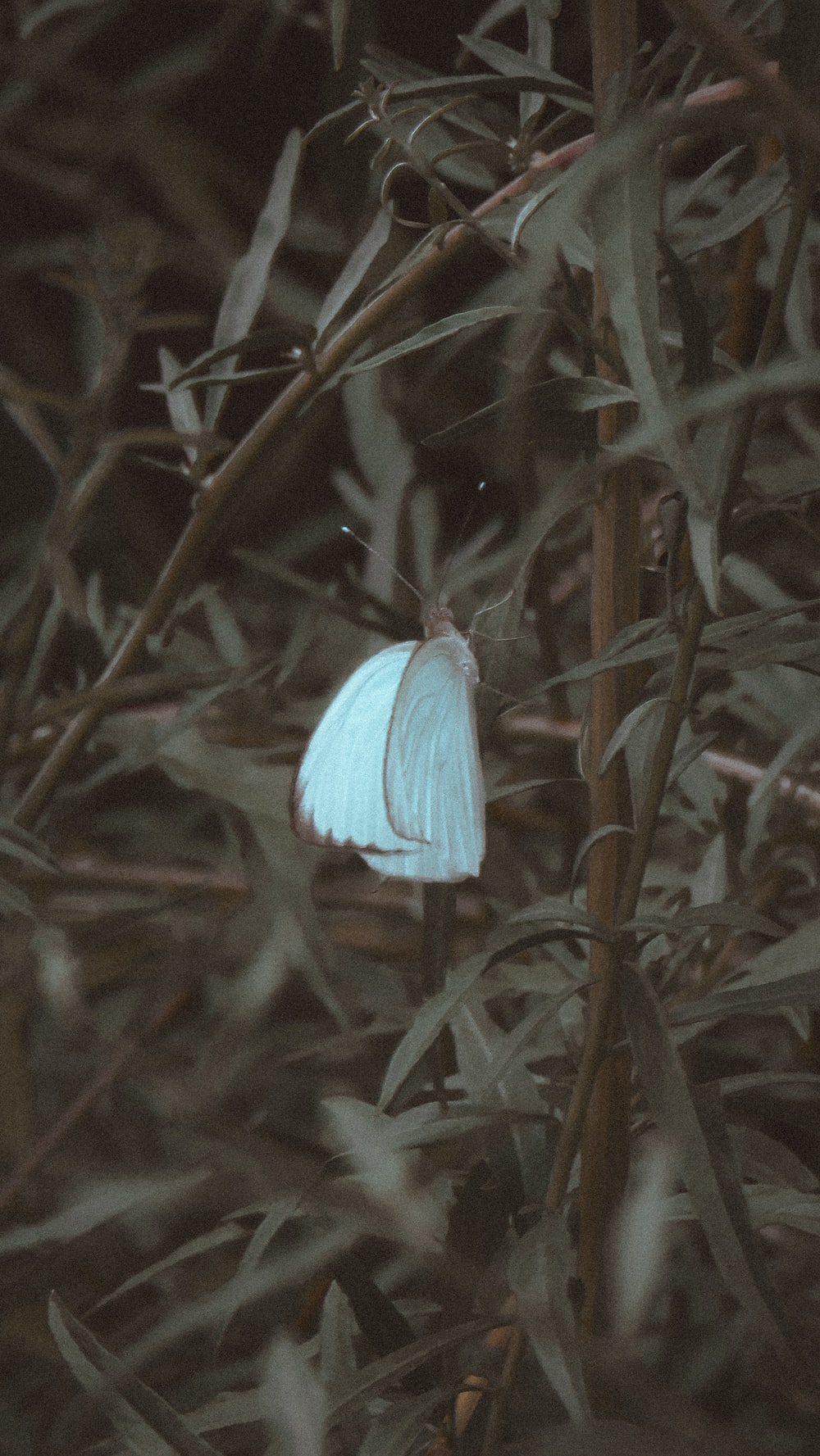 blue butterfly perched on green plant