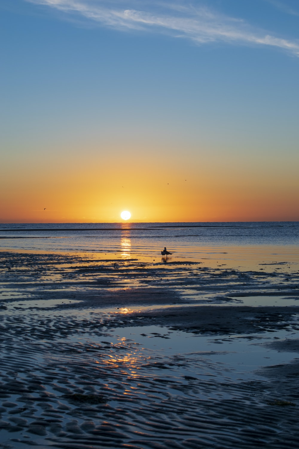 silhouette of person on beach during sunset