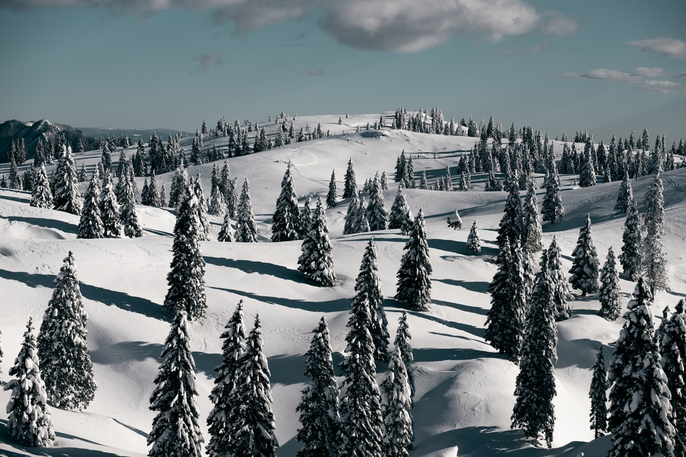 snow covered pine trees under cloudy sky during daytime