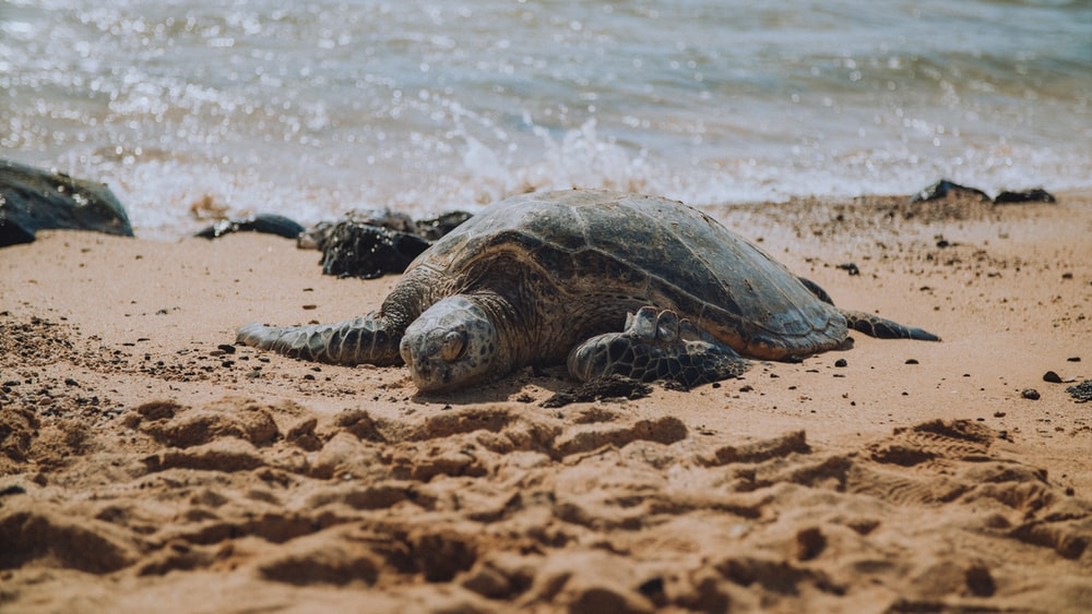 brown and green turtle on brown sand